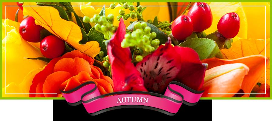Dade City Florist | Dade City FL Flower Shop | Bonita Flower
